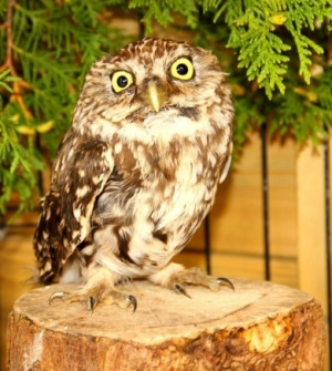 Outpouring of anger over tortured owl sees reward hit £1,000